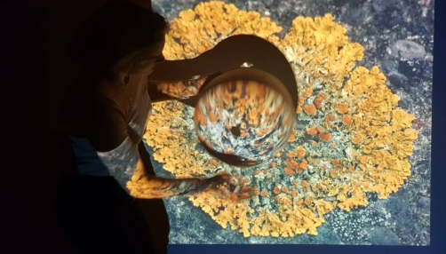 Photo of Lucy and projection mapping of orange and yellow lichen